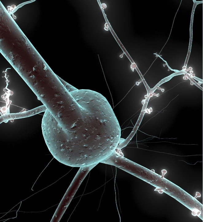 Single neuron from a human brain (Photo: The Human Brain Project)