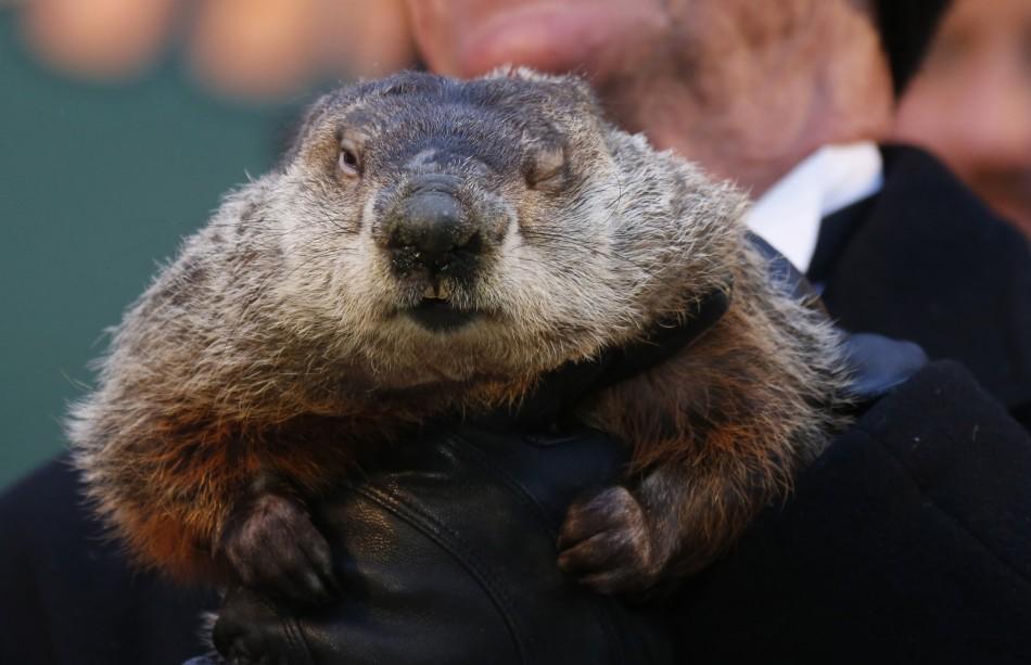 Groundhog Day 2013