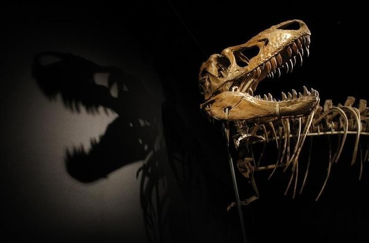 The Tarbosaurus Bataar dinosaur measured up to 12m long and is estimated to have had 64 flesh-ripping teeth