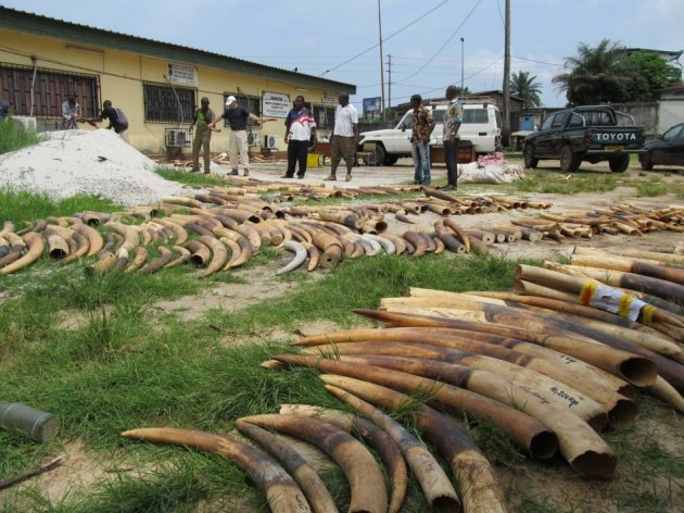 Stockpiles of ivory are seen in Gabon