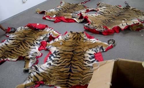 Seized Tiger Skins (Credit - TRAFFIC)