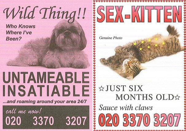 The postcards have been designed by the Mayhew Animal Home
