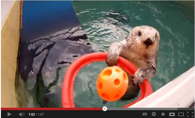 Eddie the sea otter shooting a basketball into a hoop