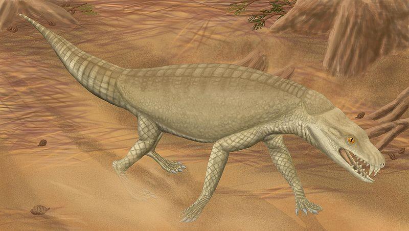 crocodyliforms