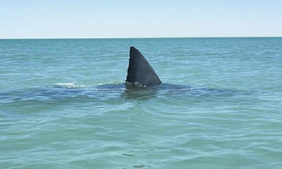 Beware of sharks