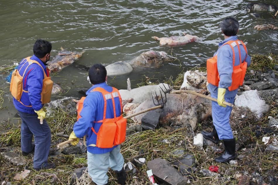 Huangpu River Dead Pigs