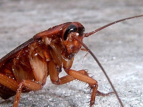 D Earth Cockroaches Timeline Shows ...