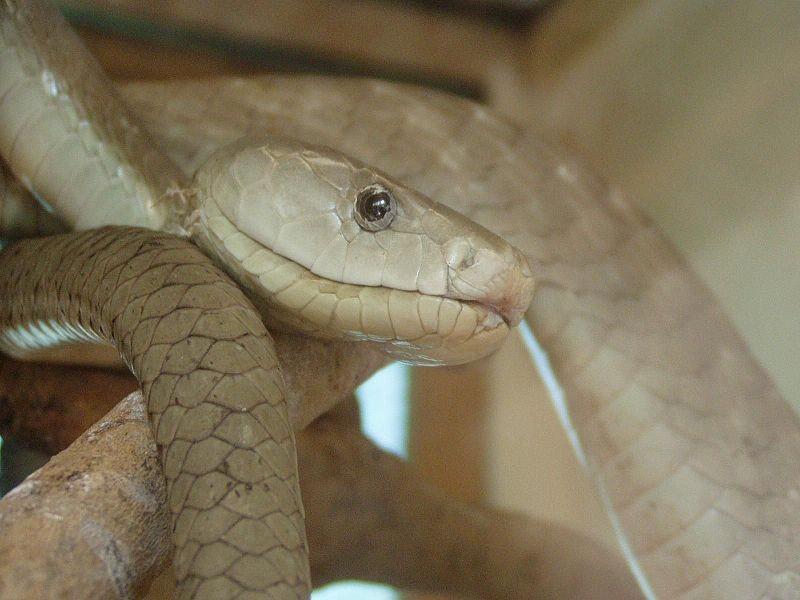 Black Mamba Snake Hunt at Pretoria Zoo Proceeds With Caution
