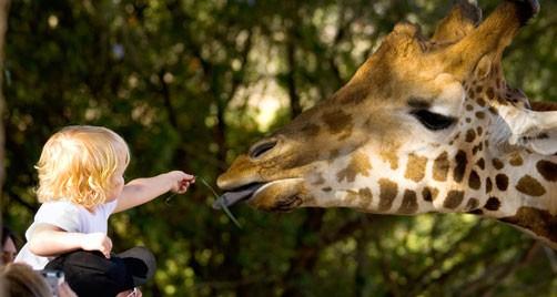 Image Pretoria Zoo likes to portray