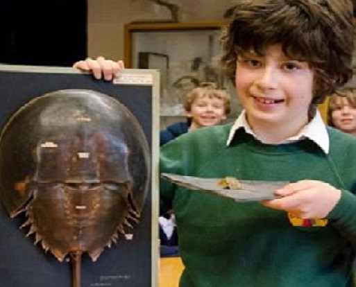 Ten-year-old Bruno Debattista found rare fossil footprints of the horseshoe crab while on holiday in Cornwall. (Oxford University Museum of Natural History)