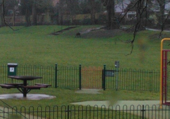 Ape in park