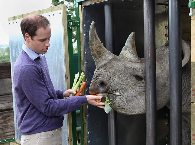Prince William visits Port Lympne wildlife park last June.