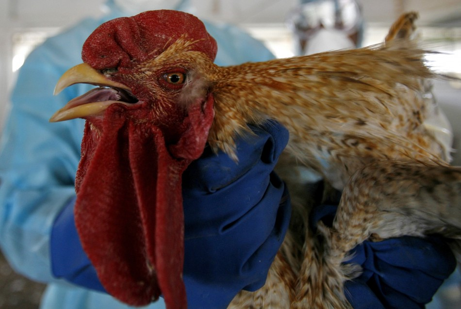 China is considered one of the nations most at risk from bird flu because it has the world's biggest poultry population