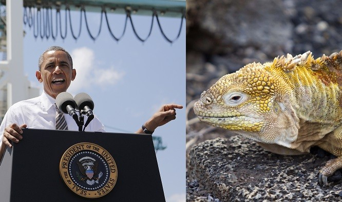 Obama Lizard