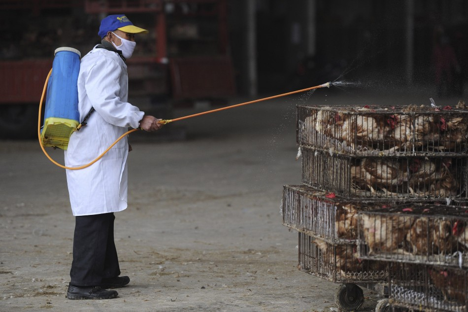 Poultry cull