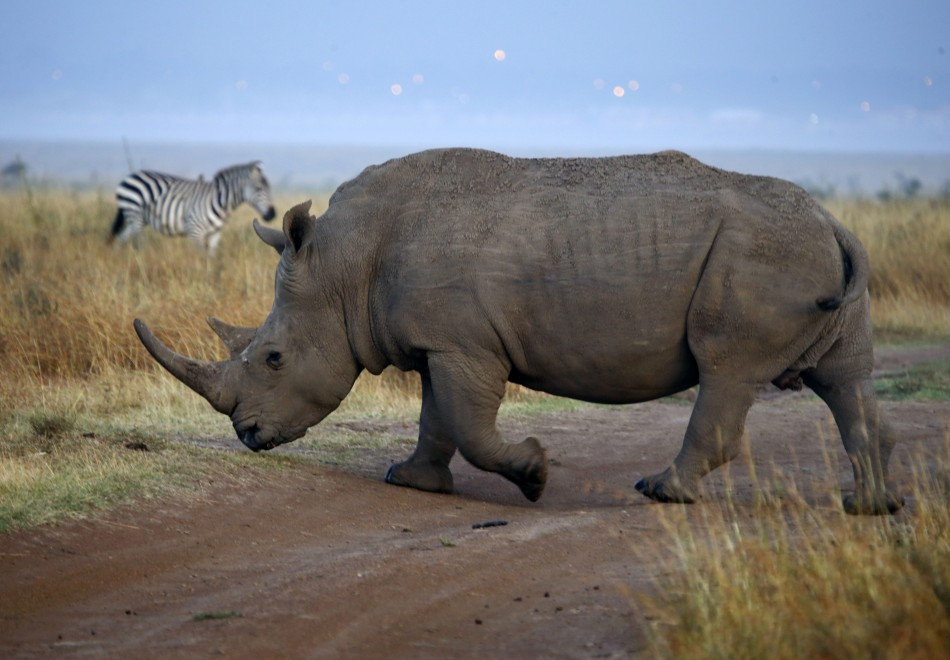 The illegal trade in rhino horn is soaring.
