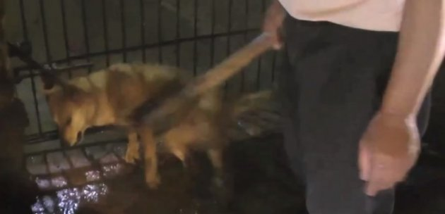 The footage shows dogs being clubbed and their neck slit while still conscious (Animal Equality)