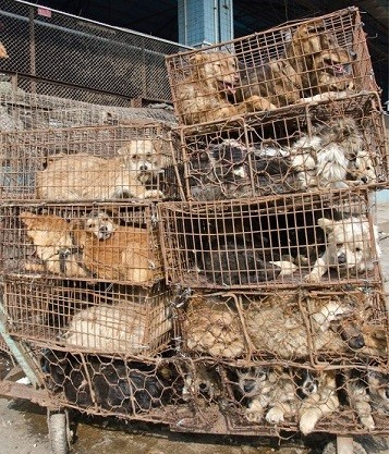 The animals are kept in tiny cages while they await their fate (Animal Equality)