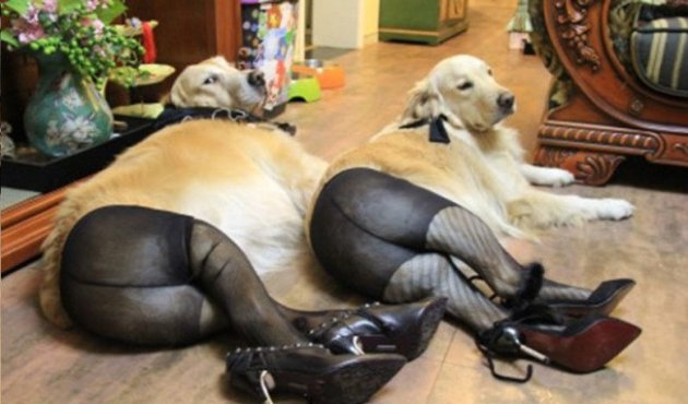 Dogs in Stockings