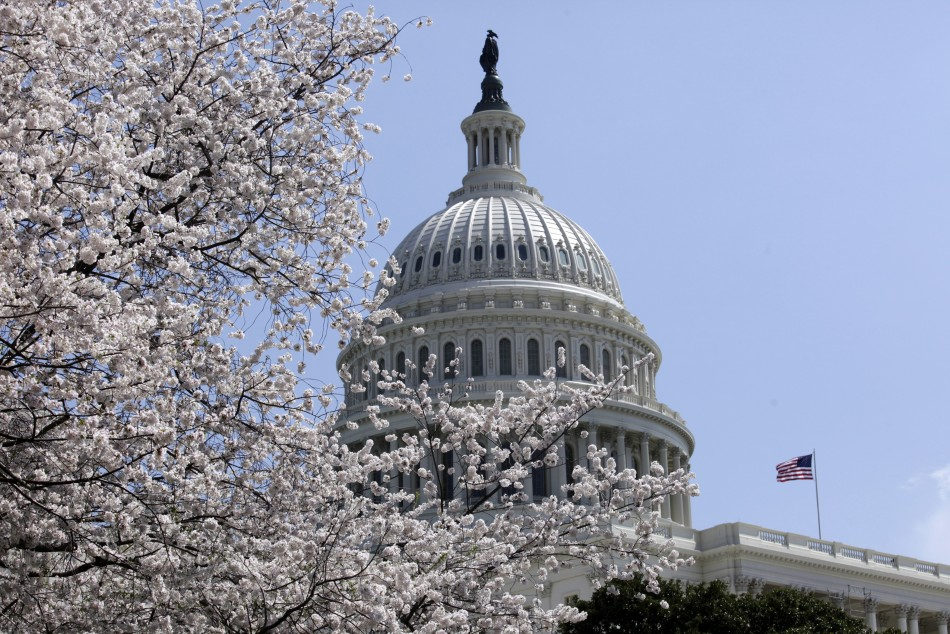 Cherry trees are in full bloom in front of the U.S. Capitol in Washington April 10, 2013.