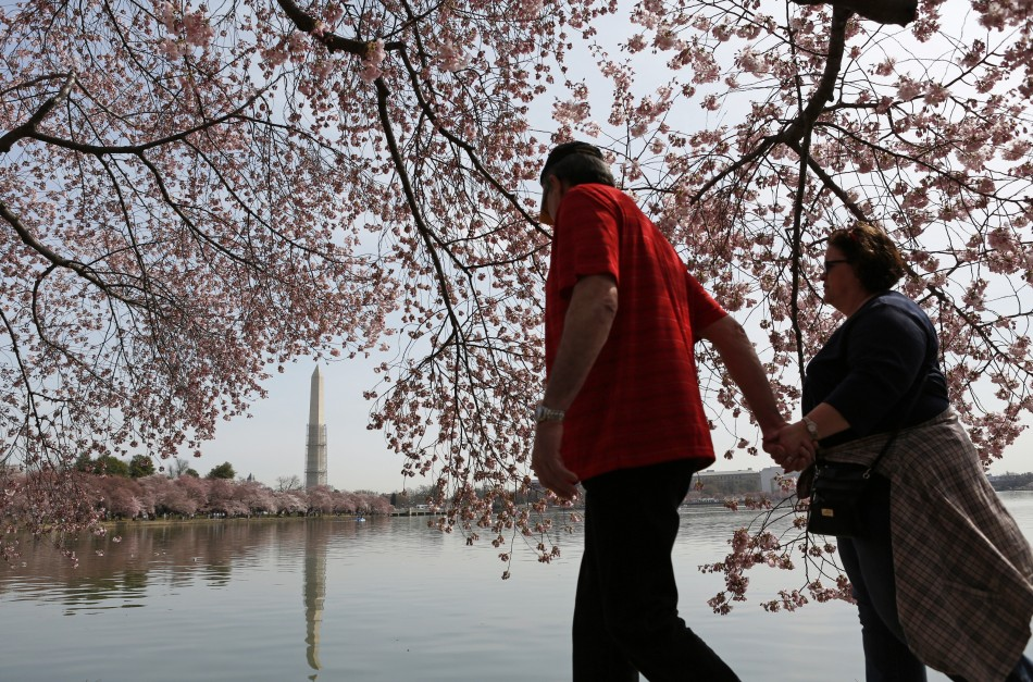 The Washington Monument is reflected as a couple walks hand-in-hand beneath cherry trees along the Tidal Basin in Washington April 8, 2013. The National Cherry Blossom Festival is in full swing, with peak bloom occurring early this week.