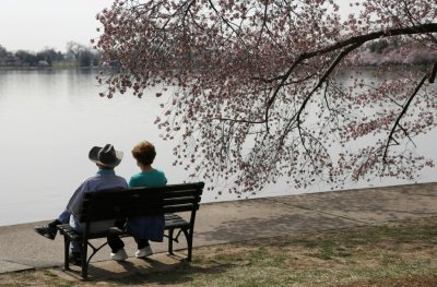A couple sits beside a cherry tree along the Tidal Basin in Washington April 8, 2013. The National Cherry Blossom Festival is in full swing, with peak bloom occurring early this week.