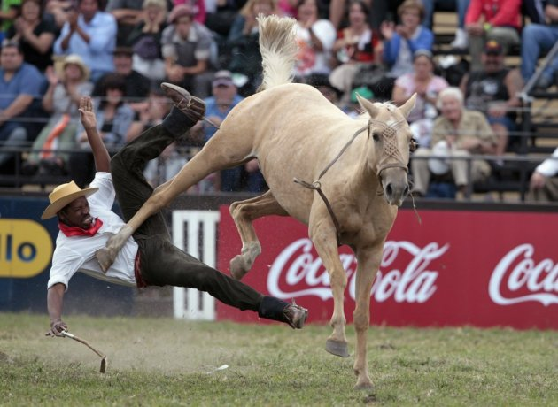 The equine's revenge: A gaucho is unseated by an unbroken horse during the annual celebration of Criolla Week in Montevideo.