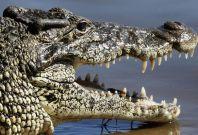 Spanish Crocodile