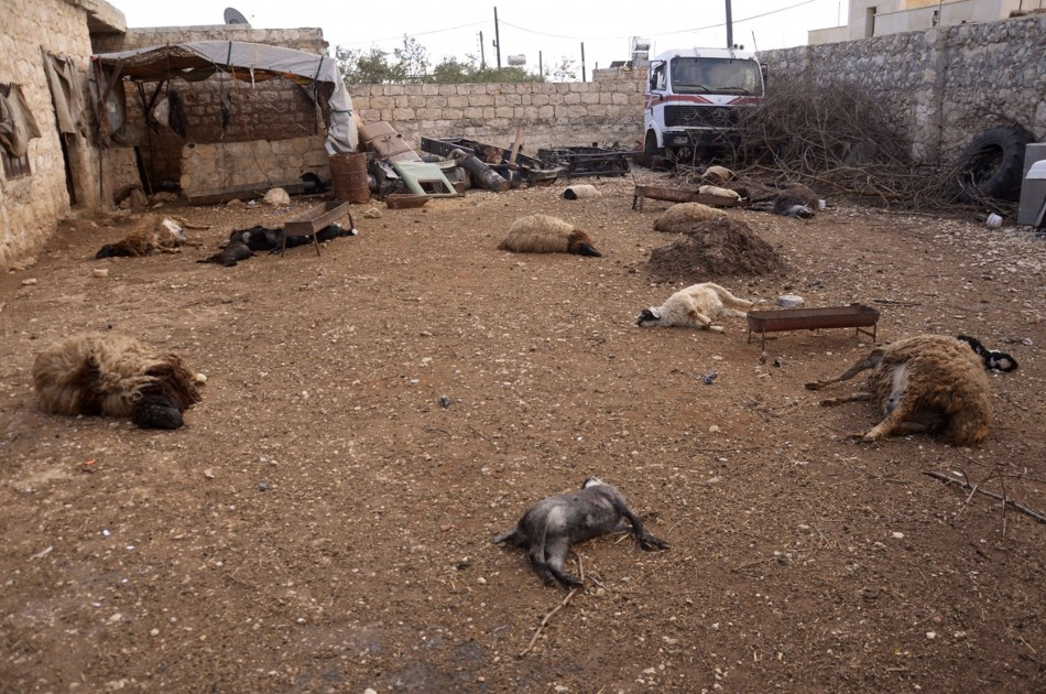 Animal carcasses lie on the ground, killed by what residents said was a chemical weapon attack