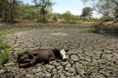 Weather Watch: Cyclone Zane's Rainfall Still Too Late for Queensland Farmers, Cattle Raizers Affected By Drought