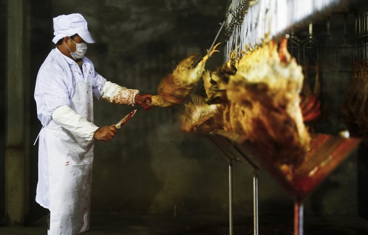 H7N9 has cost China £4.2bn (Reuters)