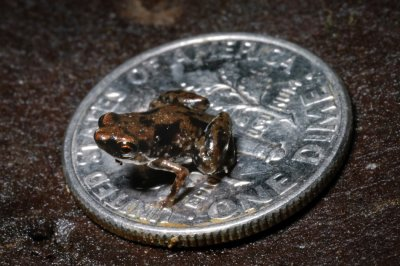 Worlds Smallest Vertebrate