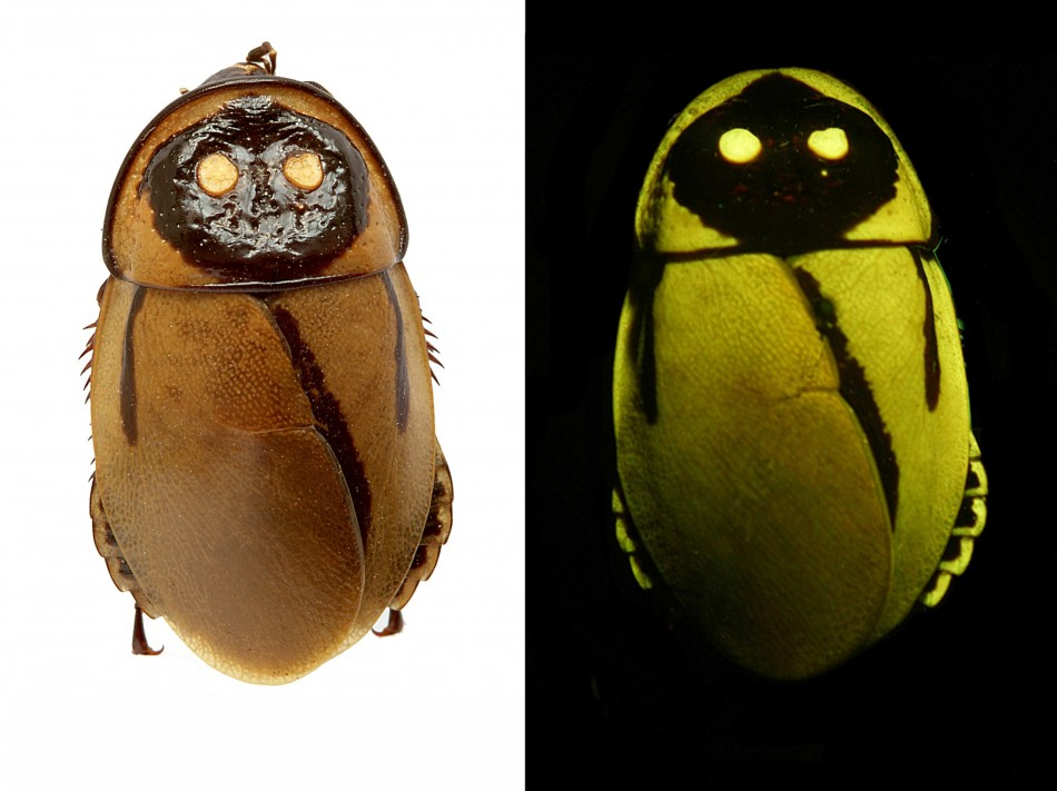 Lighting Roaches