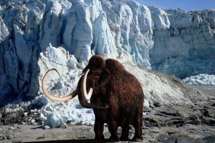 Woolly mammoth in icy wastes