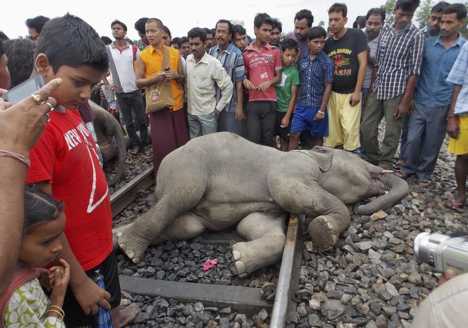 Elephants Killed as Train Runs Over Them