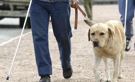 A report says around 10 guide dogs are being attacked every month (Reuters)