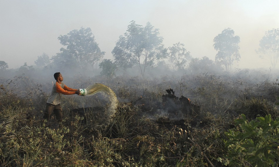 Indonesia oil palm fires