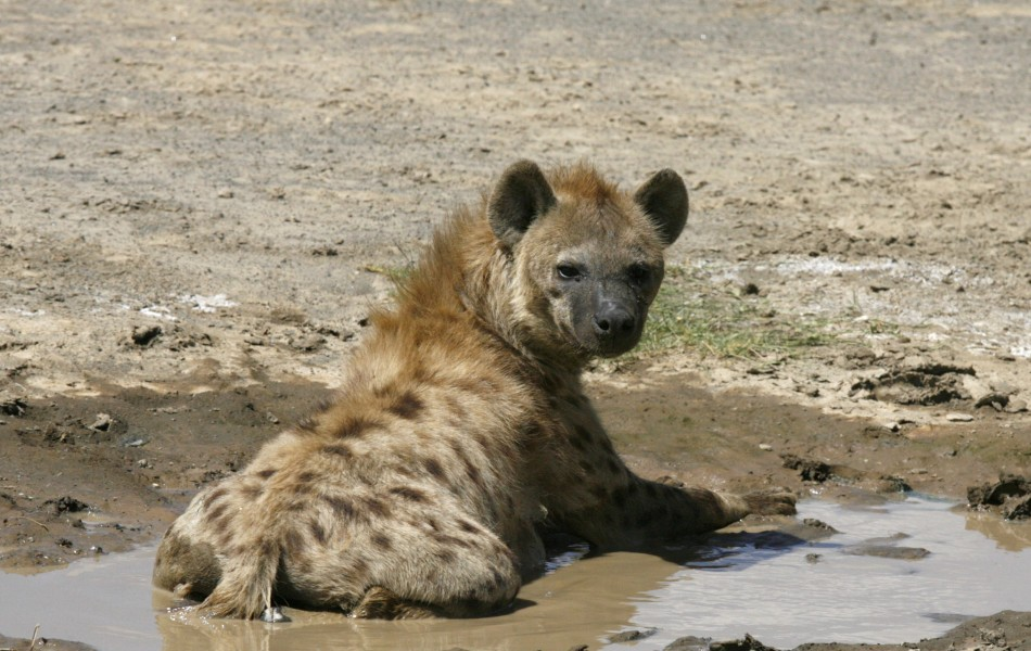 Hyena munched man's genitals in Malawi during bizarre get-rich-quick ritual