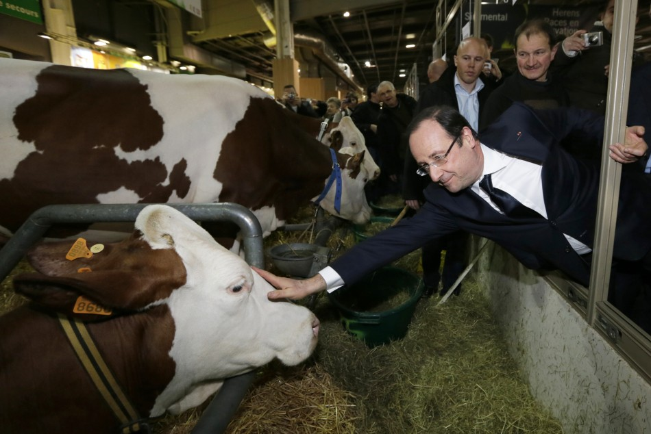 French President Francois Hollande strokes a cow during his visit to the 50th International Agricultural Show in Paris, February 23, 2013. (Photo: REUTERS)