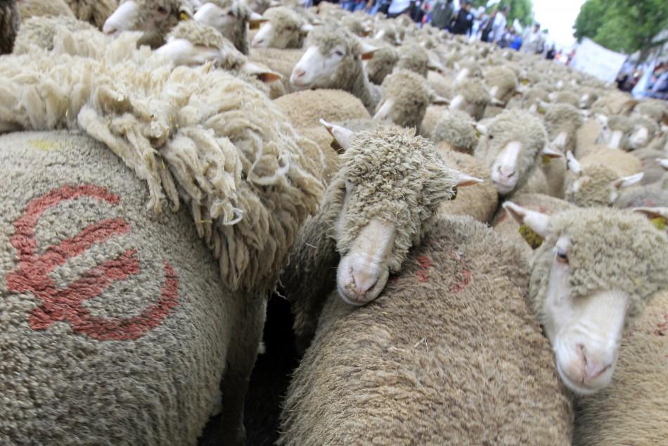 Croatia keen to join EU herd