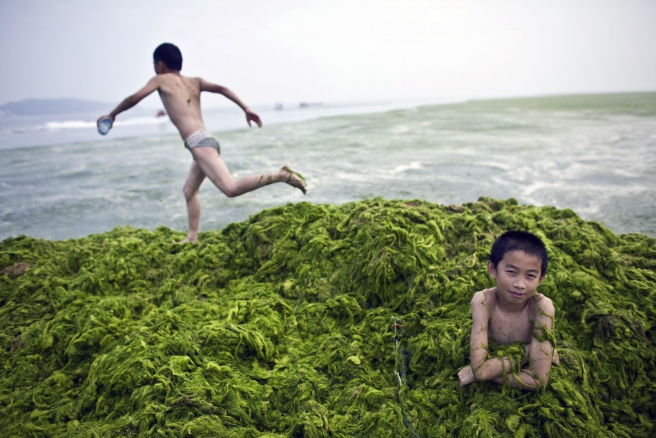 A boy sits in a pile of algae as his friend runs at a beach in Qingdao, Shandong province