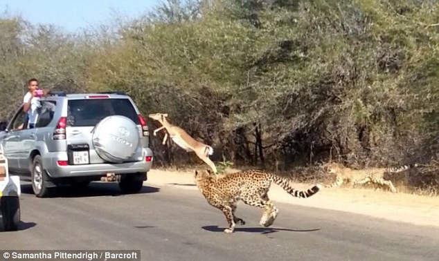 Four lions escape from park in South Africa