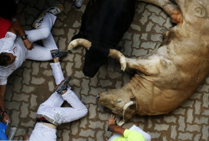 Several people were injured in a stampede at Spain's San Fermin bull run on Saturday 11 July, when bulls that had chased them down the cobbled streets of Pamplona were crushed against them at the narrow entrance to the bullring
