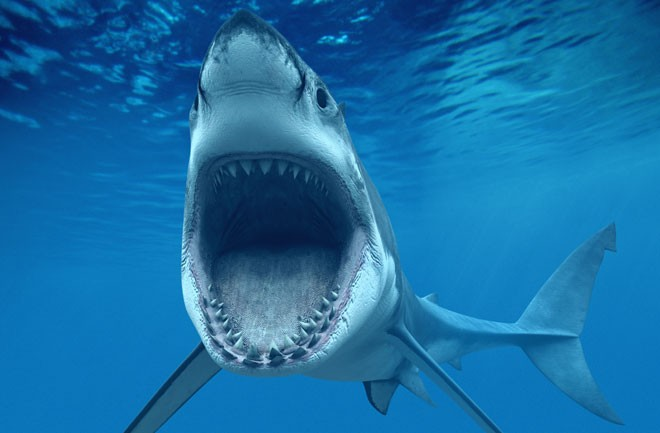 New website to keep surfers from jaws of killer sharks, like this Great White