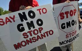 GMO Monsanto