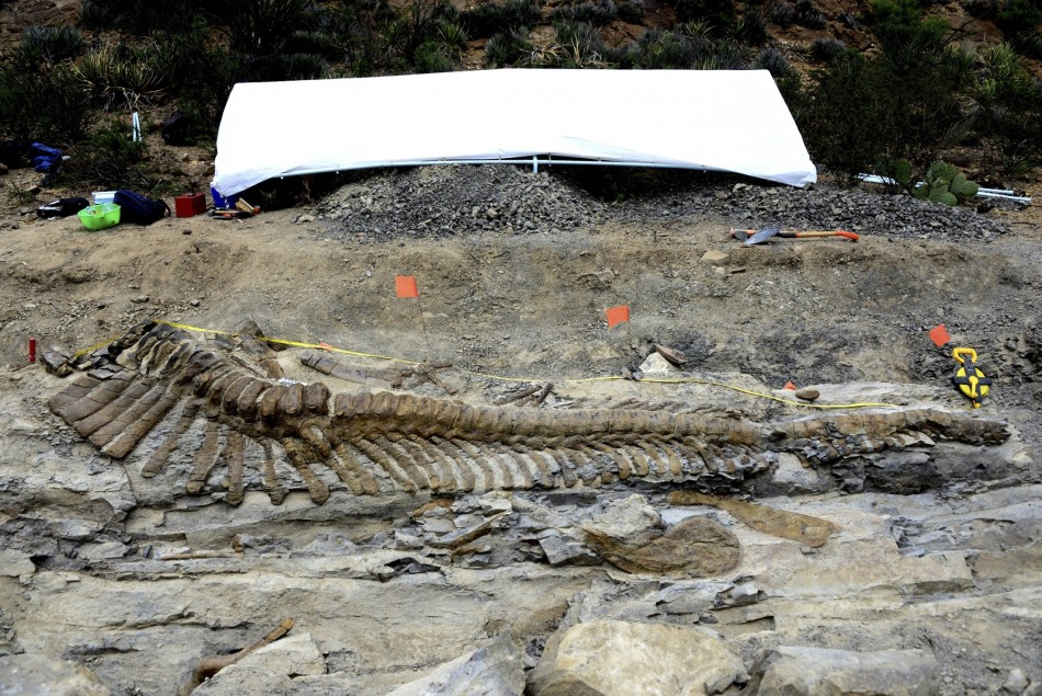72-Million-Year-Old Dinosaur Tail Found
