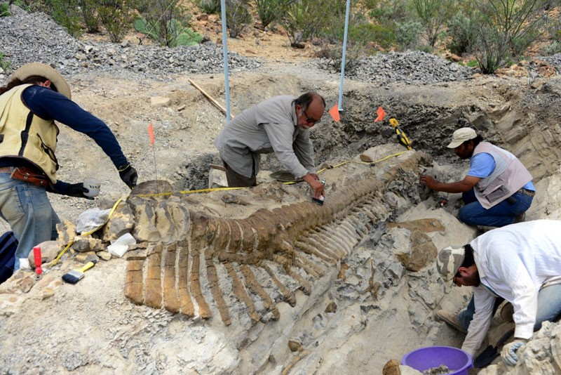 72-Million-Year-Old Dinosaur Tail Found