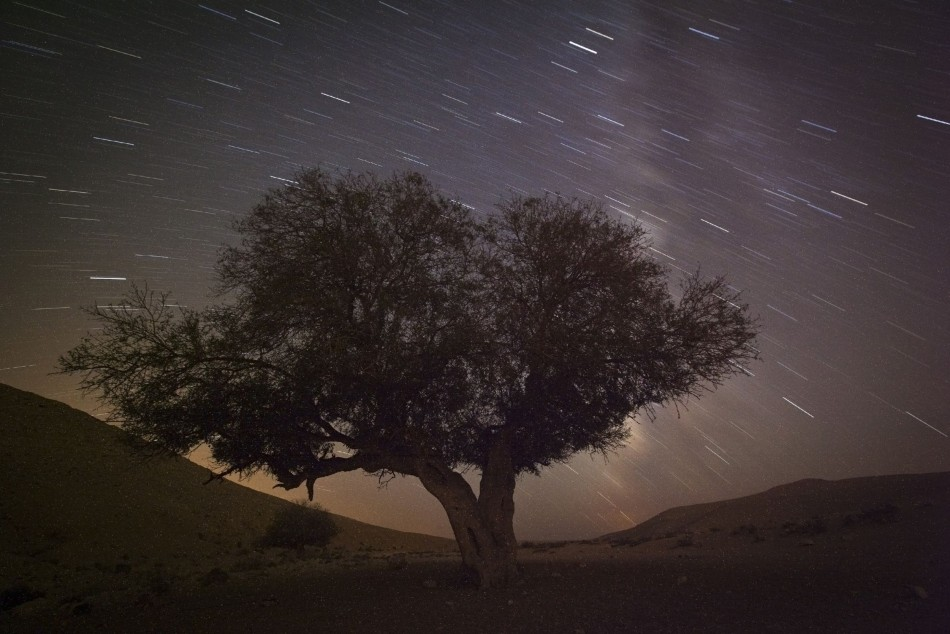 A long exposure shows stars behind a tree during the annual Perseid meteor shower near the southern town of Mitzpe Ramon, August 13, 2012. The annual Perseid meteor shower 2013 is expected to reach its peak between 12 and13 August. (Photo: REUTERS/Amir Cohen)