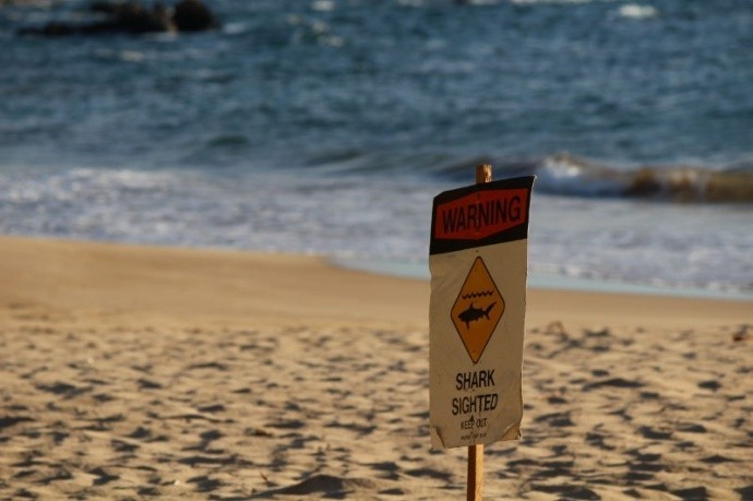 Jana Lutteropp was attacked off the Palauea Beach in the Makena, Maui County (MauliNow)