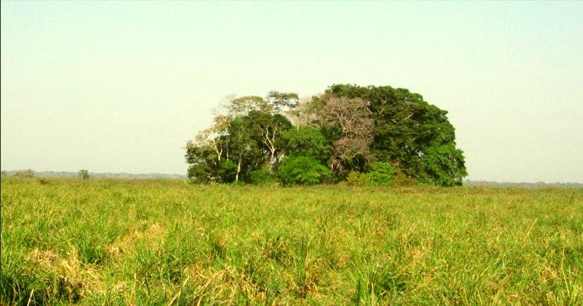 A midden (Isla del Tesoro) and surrounding savannah is seen in Bolivian amazon rainforest. The midden is one of the oldest sites in western Amazonia to have inhabited hunter-gatherers 10,000 years ago, a new study reveals. (Photo: PLoS ONE)